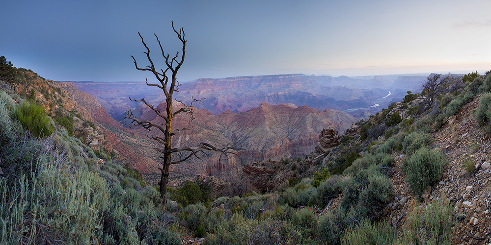 Sunrise - Desert View, Grand Canyon, Arizona (Lonely tree)