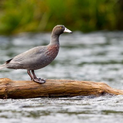 Birds & Reptiles of New Zealand