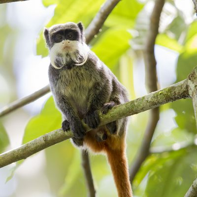 Mammals & Reptiles of South & Central America