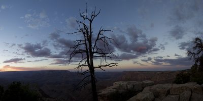 Grand View Sunset, Grand Canyon, Arizona (Old dead tree)