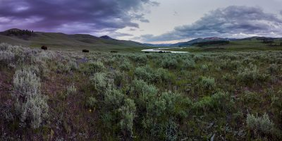 Lamar Valley Sunset with the Bison, Yellowstone National Park