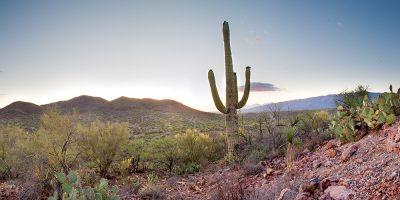 Saguaro Cactus - Colossal Caves