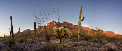 Saguaro Cactus - Organ Cactus National Monument, Arizona4177