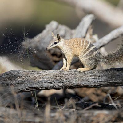 Mammals, Bugs & Reptiles of Australia