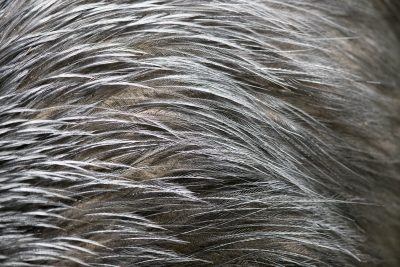Southern Cassowary (Feathers)
