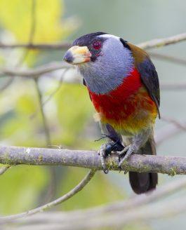 TANDAYAPA BIRD LODGE & SURROUNDS