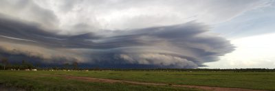 Shelf Cloud Cows, Adelaide River Flood Plain - 14th Feb 2016